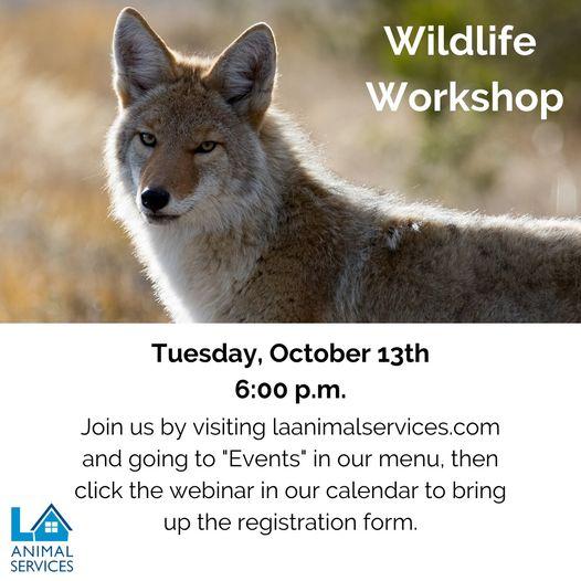 Wildlife workshop